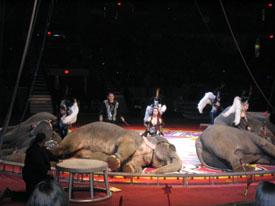 sirkus6.jpg