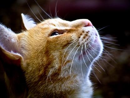 Kucing aja bisa sabar